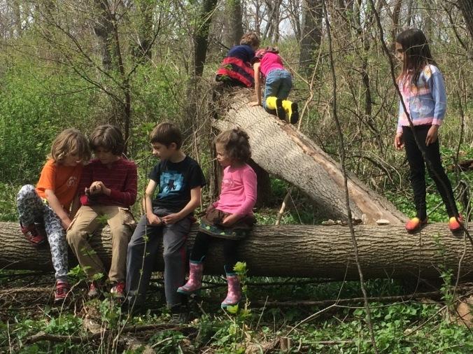 madison-forest-school