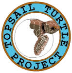 sea-turtle-rescue